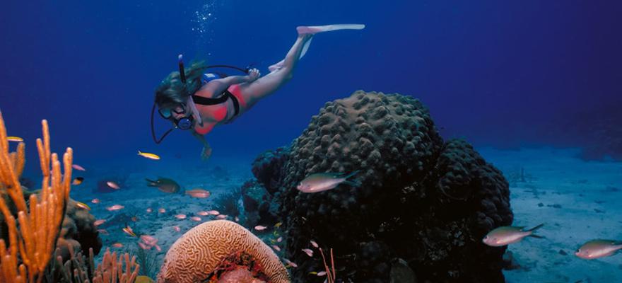 plongeuse
