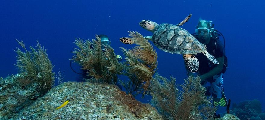 tortue et plongeur